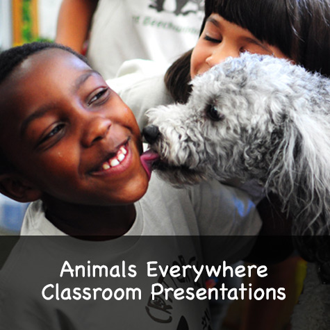 Animals Everywhere Classroom Presentation